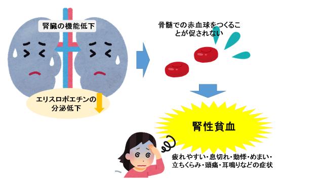 腎硬化症査